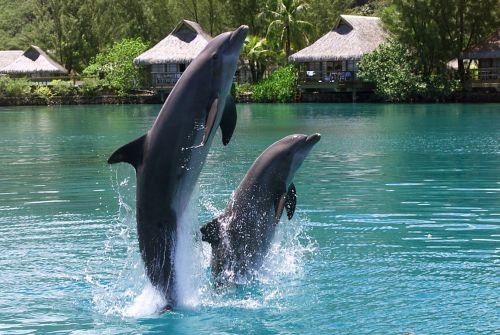 Dolphin_Center_12709
