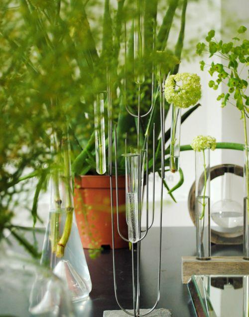 plantas_para_decorar_mesa