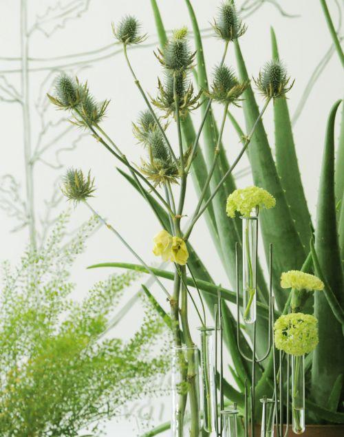 decorando_com_plantas_medicinais