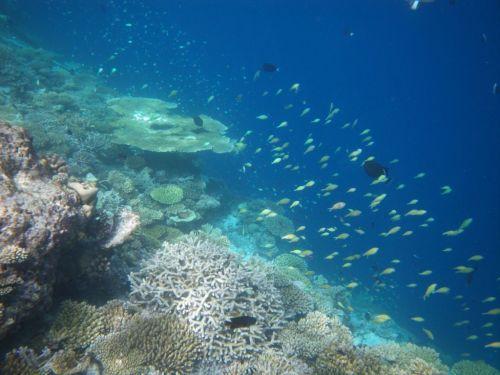 Ilhas Maldivas mergulho