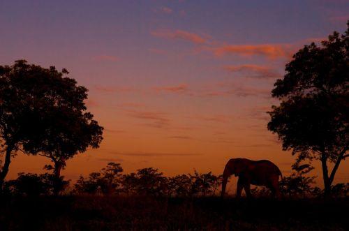 elefante África do Sul