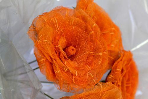 flores-esqueletizadas