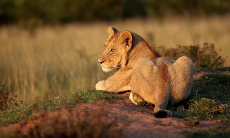 África um dos destinos mais procurados para lua de mel