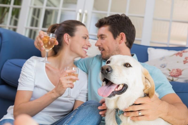 pets na nova casa recém-casados
