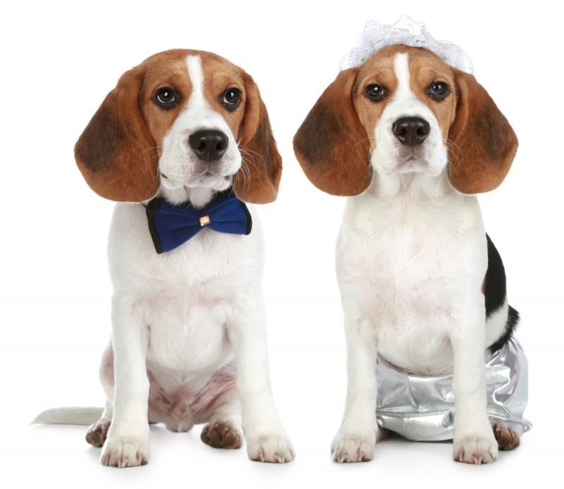 cachorro em casamento - pets no Grande Dia (1)