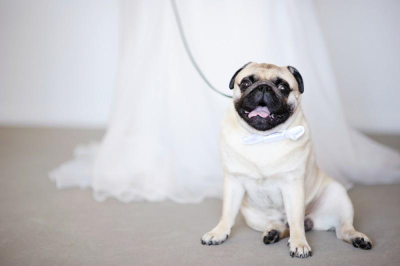 cachorro em casamento - pets no Grande Dia (2)