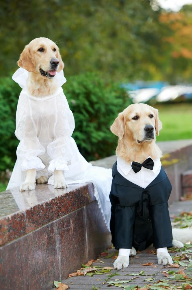 cachorro em casamento - pets no Grande Dia (3)