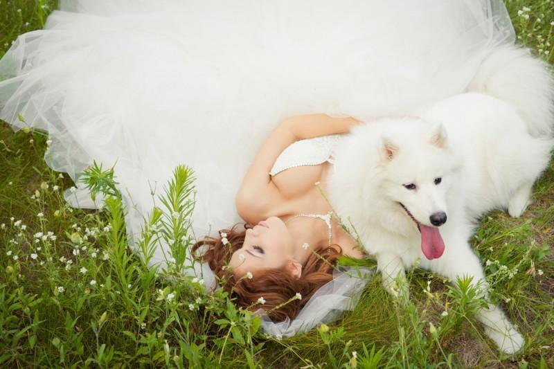 cachorro em casamento - pets no Grande Dia (4)