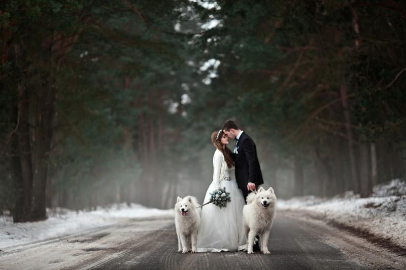 cachorro em casamento - pets no Grande Dia (5)