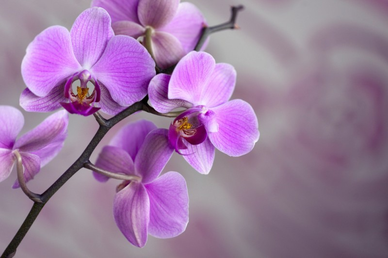 buquê de orquídea