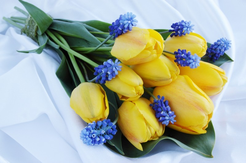 buquês de tulipas amarelas - revista icasei