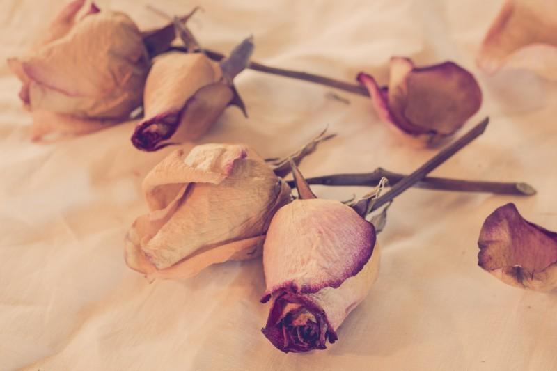 flor desidratada - revista icasei