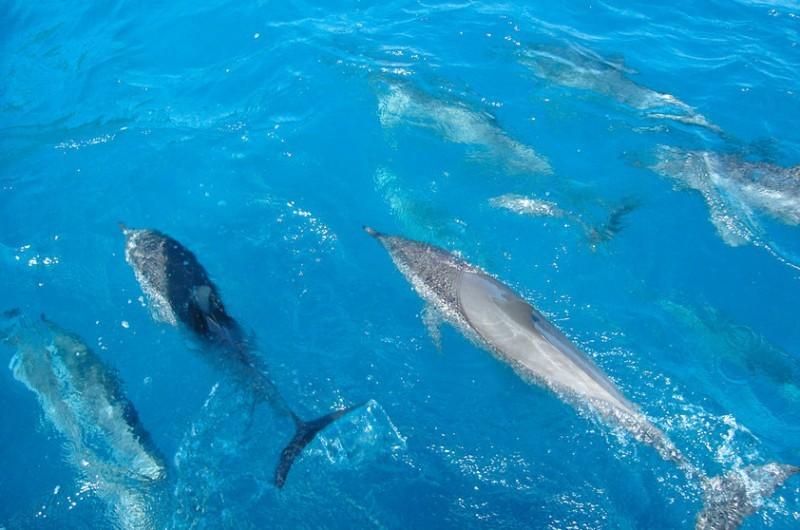 lua-de-mel-fernando-de-noronha-golfinhos-revista-icasei