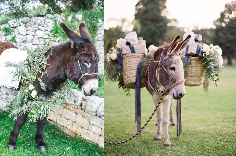 pets-no-casamento-no-campo-burro-2-revista-icasei