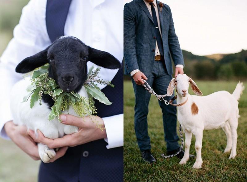 pets-no-casamento-no-campo-cabra-revista-icasei (1)