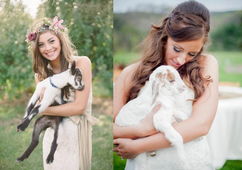 pets-no-casamento-no-campo-cabra-revista-icasei (2)