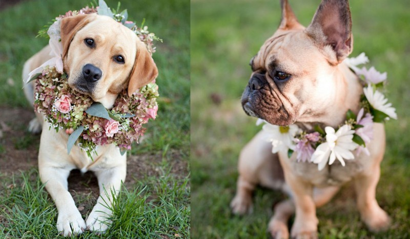 pets-no-casamento-no-campo-cachorro-revista-icasei (1)