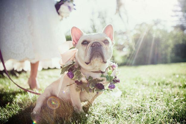 pets-no-casamento-no-campo-cachorro-revista-icasei-capa