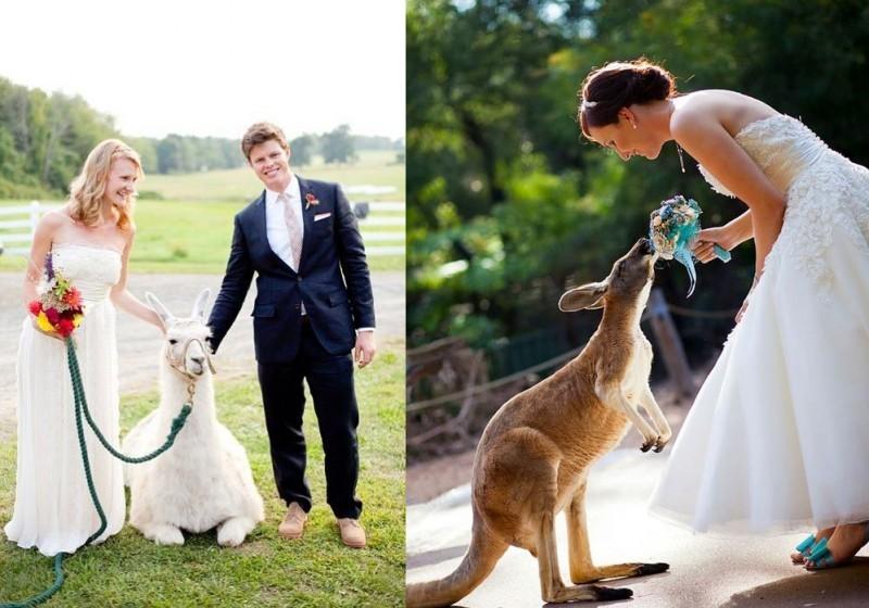 pets-no-casamento-no-campo-lhama-e-canguru-revista-icasei
