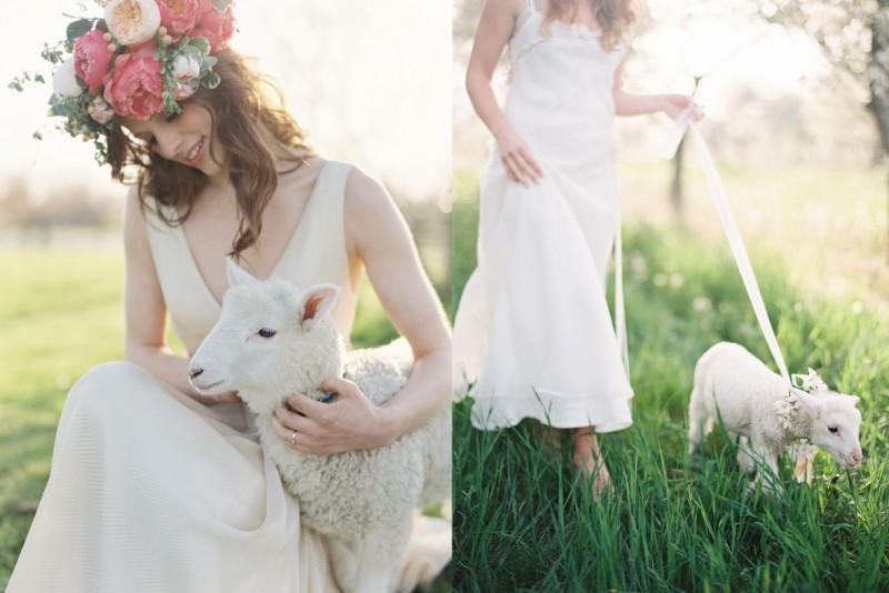 pets-no-casamento-no-campo-ovelha-revista-icasei (1)