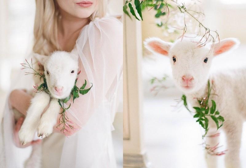 pets-no-casamento-no-campo-ovelha-revista-icasei (2)