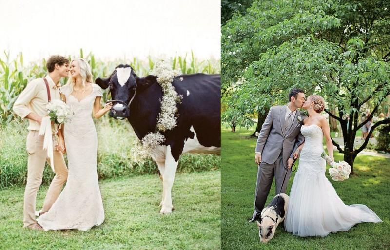 pets-no-casamento-no-campo-vaca-e-porco-revista-icasei