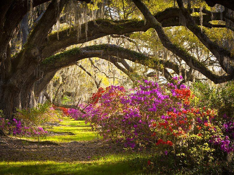Destinos-para-aproveitar-lua-de-mel-em-Charleston