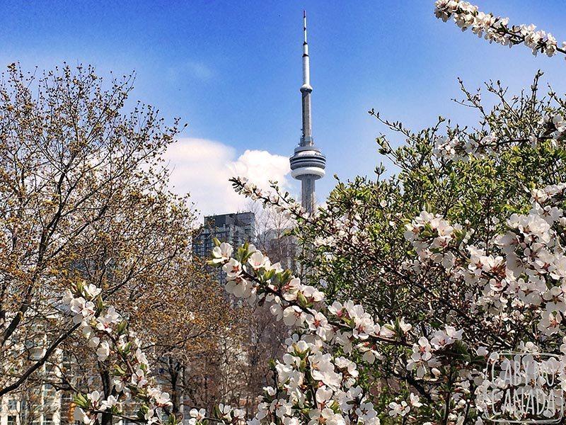Destinos-para-aproveitar-lua-de-mel-na-primavera-Toronto