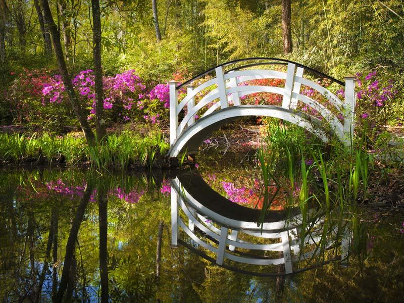 Magnolia Plantation and Gardens-Charleston-lua-de-mel (2)