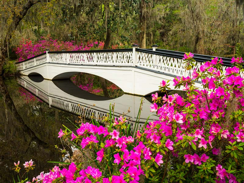 Magnolia Plantation and Gardens-Charleston-lua-de-mel (3)