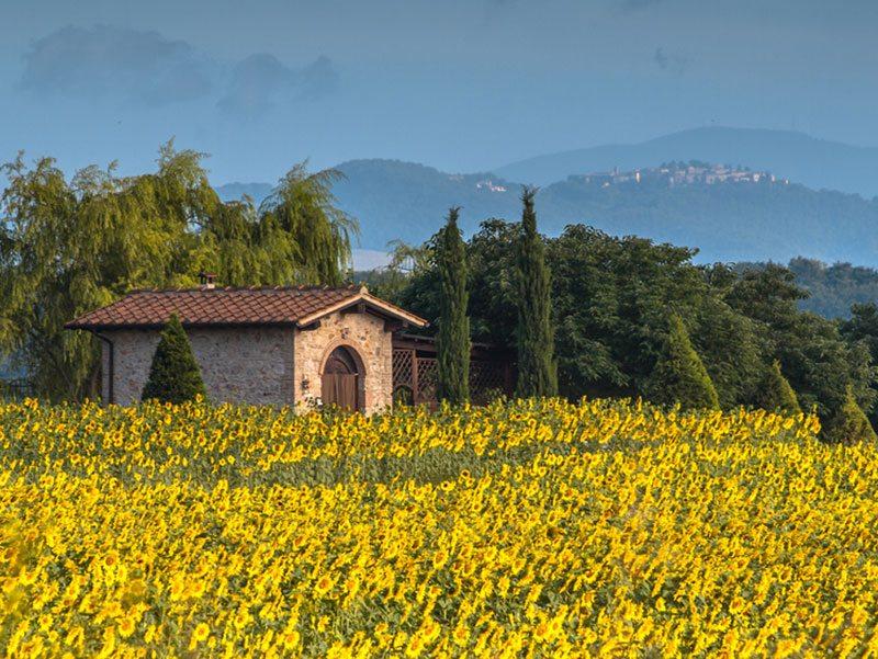 campo-de-girassois-toscana-primavera (1)