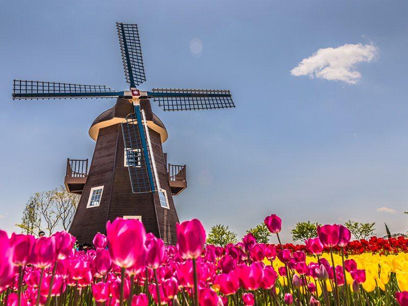 campo-de-tulipas-em-amsterdam-lua-de-mel-primavera (5)
