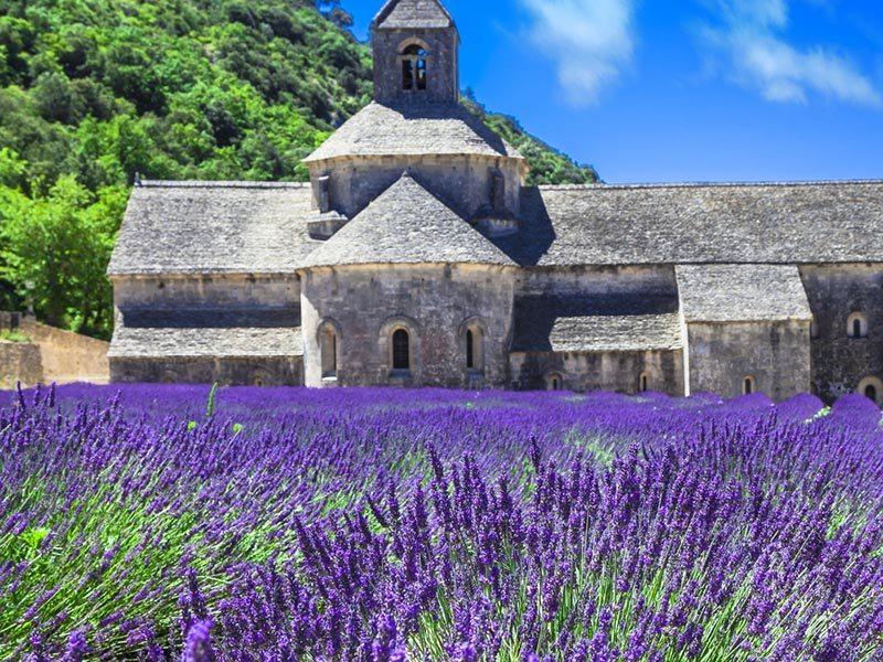 campos-de-lavanda-provence-lua-de-mel (2)