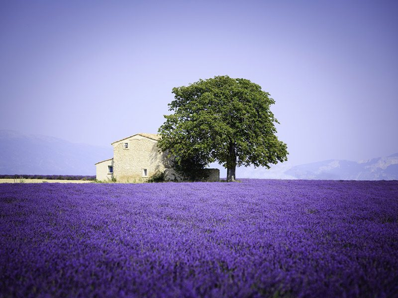 campos-de-lavanda-provence-lua-de-mel (7)