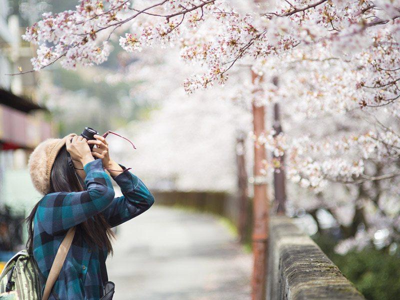 cerejeiras-em-kyoto-japao-lua-de-mel-na-primavera (1)
