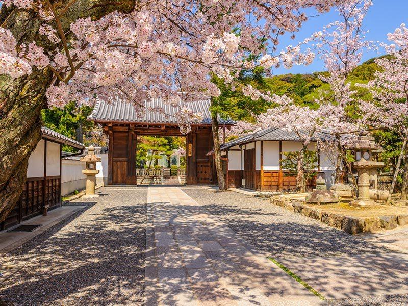 cerejeiras-em-kyoto-japao-lua-de-mel-na-primavera (6)