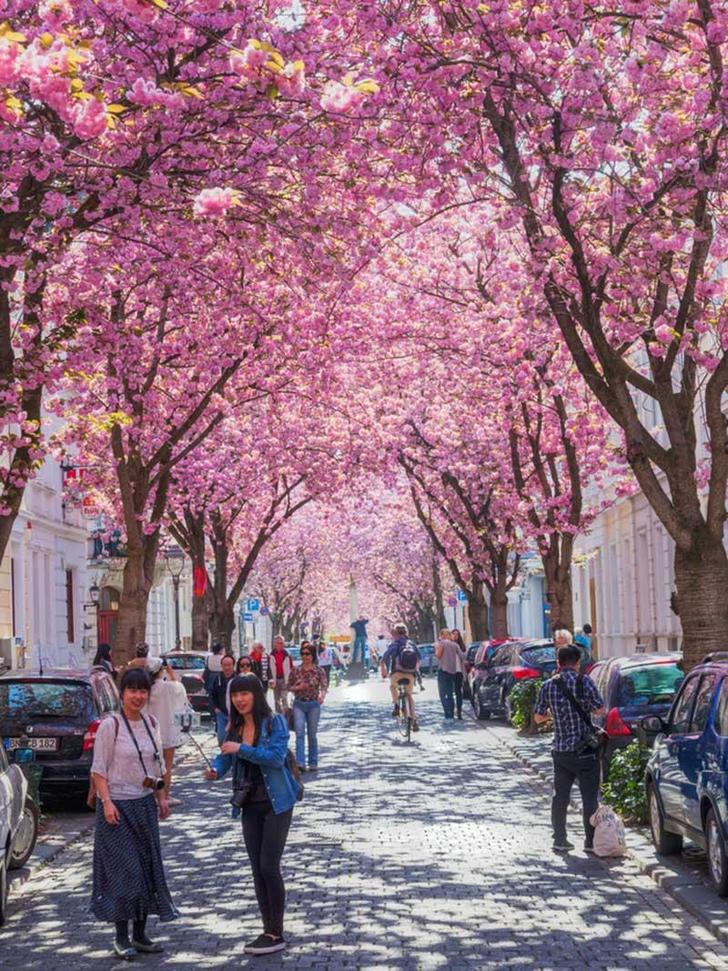 cherry-blossom-alemanha-lua-de-mel-primavera (1)