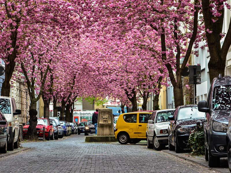cherry-blossom-alemanha-lua-de-mel-primavera (2)