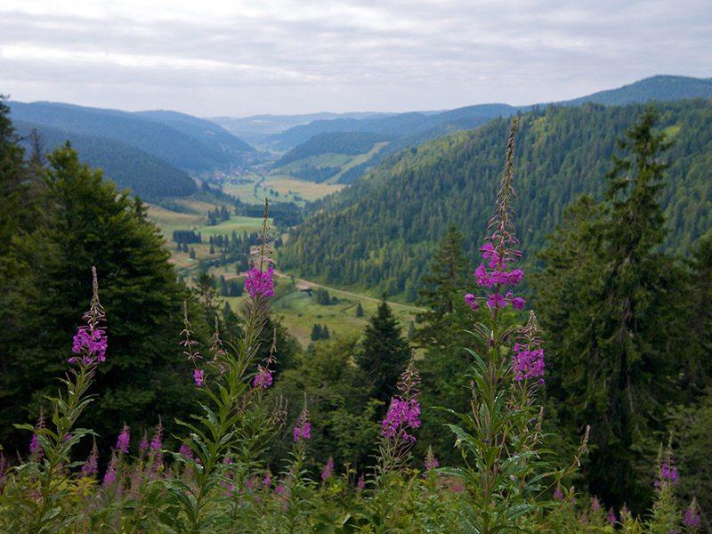 floresta-negra-alemanha-lua-de-mel-na-primavera (2)