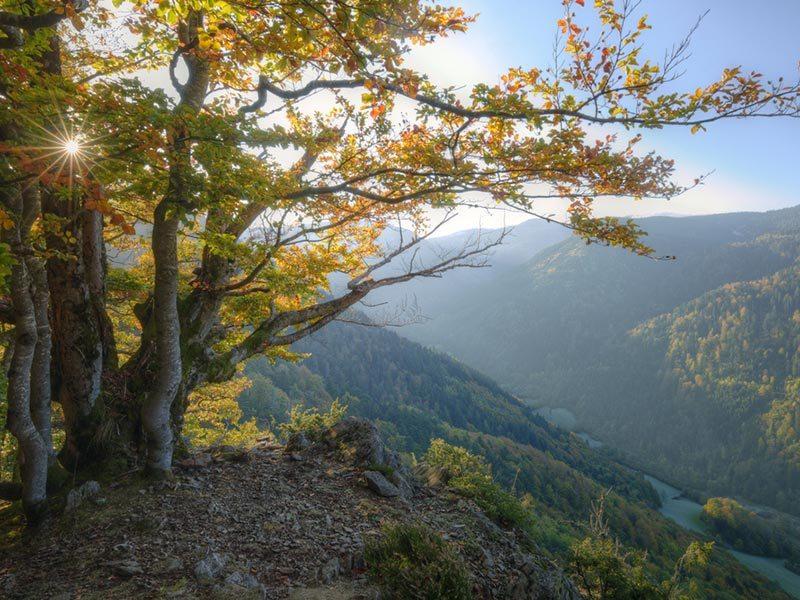 floresta-negra-alemanha-lua-de-mel-na-primavera (3)