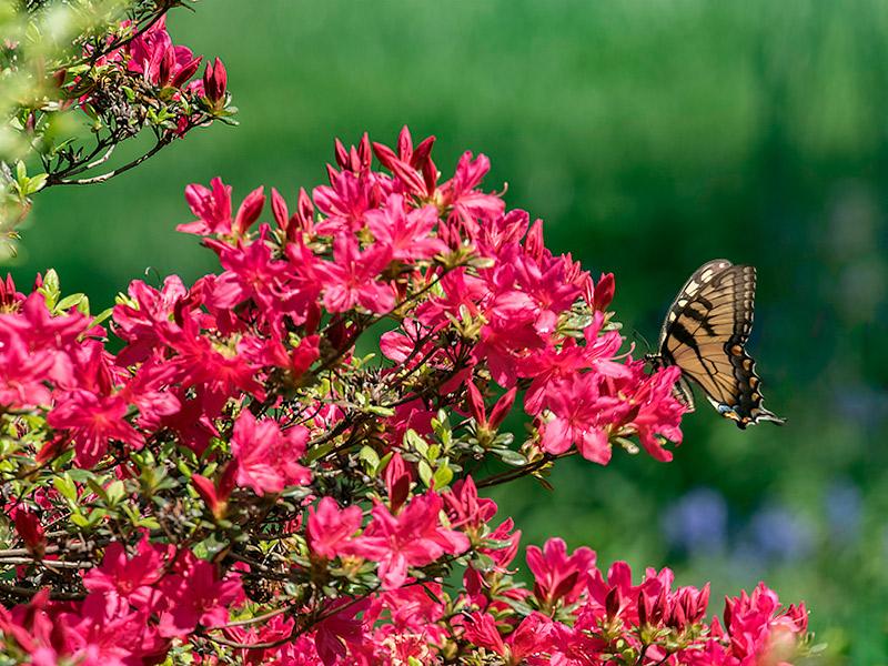 Lua de mel Destinos para curtir a primavera Gramado
