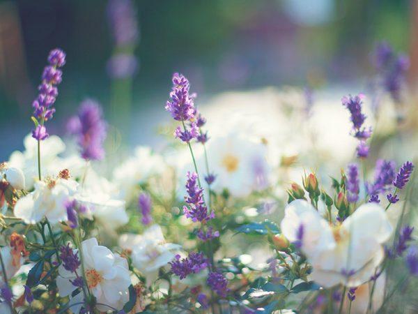 Lua de mel Destinos para curtir a primavera