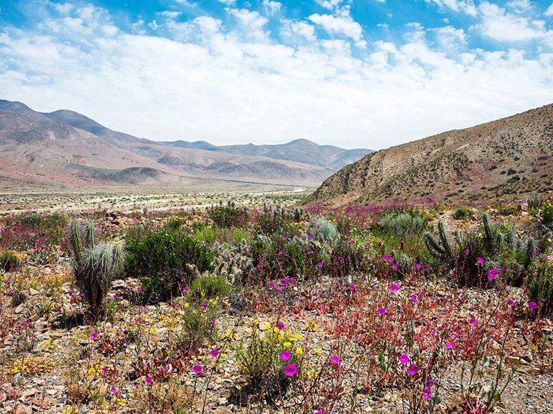 Onde curtir a lua de mel na primavera deserto do Atacama