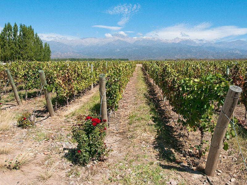 Onde curtir a lua de mel na primavera Mendoza