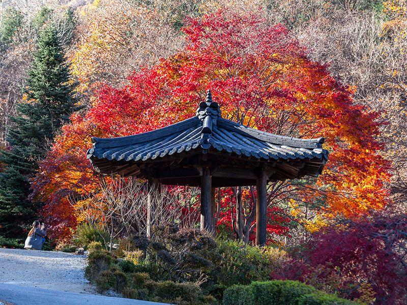 Lua de mel no outono Coreia do Sul