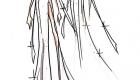 Vestido de noiva coleção capsula delphine manivet