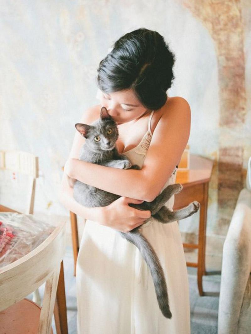 Pet no casamento gato pode