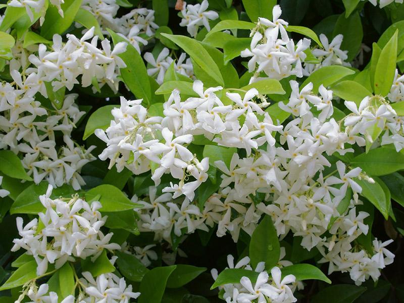 Flores mais usadas no casamento Angélica