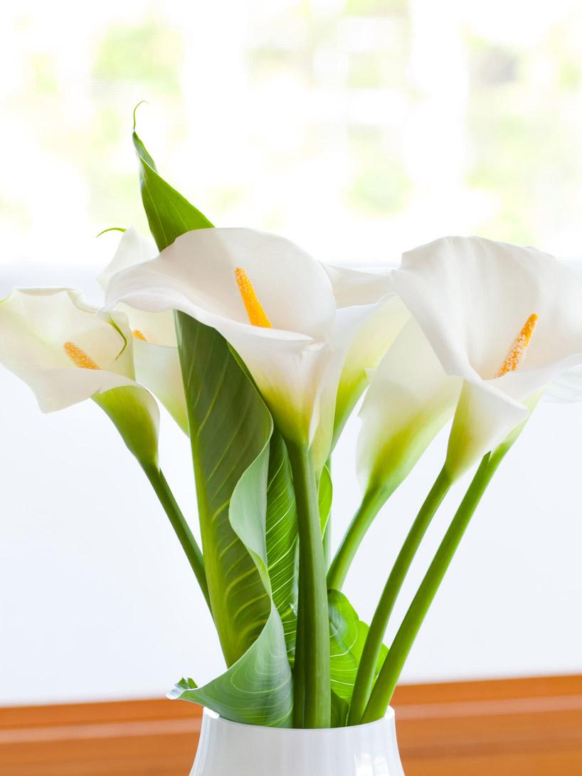 Significado flores mais usadas no casamento copo de leite