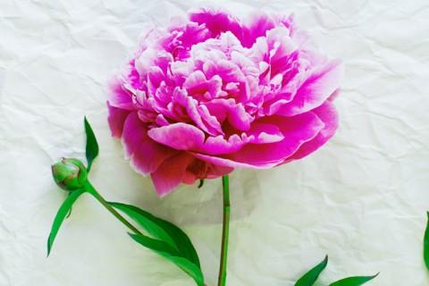 Significado flores mais usadas no casamento